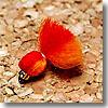ヴァンフック(VANFOOK) ビーズヘッドアフロエッグ #10 オレンジ×レッド
