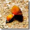 ヴァンフック(VANFOOK) ビーズヘッドアフロエッグ #10 ブラウン×オレンジ