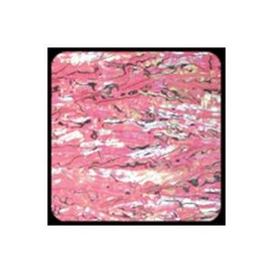 ホッツ(HOTS) アワビワークス アワビシート ニュージーランド XL ピンク