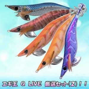 エギ王 Q LIVE 厳選セット(オールマイティ)!!